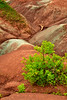 Vibrant Green tree with red rocks of Badlands