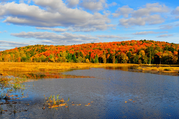 The Fall is here in Algonquin
