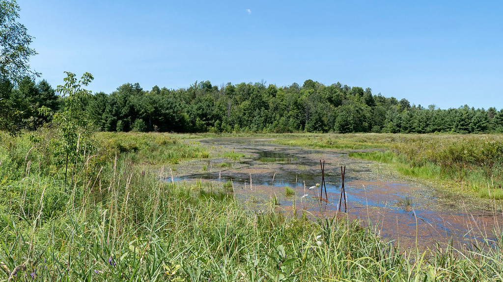 Wetlands at Marble Rock Conservation Area
