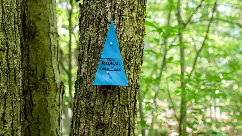 Rideau Trail Association blue triangle blazes