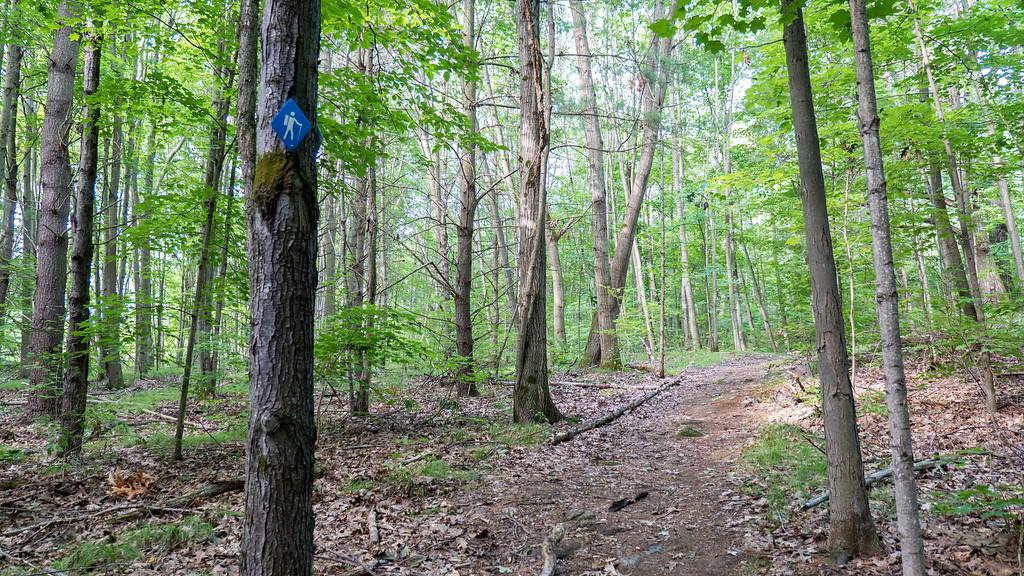 Bear Loop (Blue Trail ) - 1000 Islands National Park