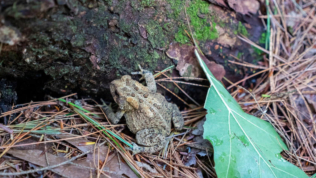 Toad at the 1000 Islands National Park