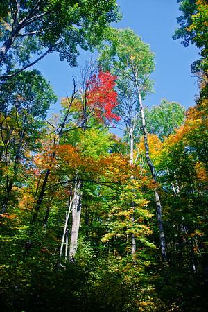 Splash of colors in Algonquin Provincial Park in Ontario