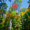 Splash of colors in Algonquin Provincial Park in Ontario