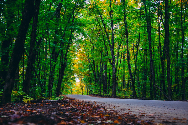 Road through the forest, Ontario