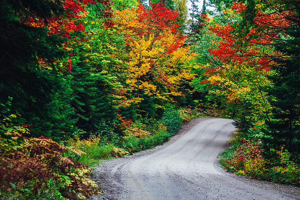 Road through fall foliage, Algonquin Provincial Park, Ontario