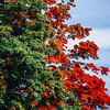 Fall foliage in Algonquin Provincial Park, Ontario