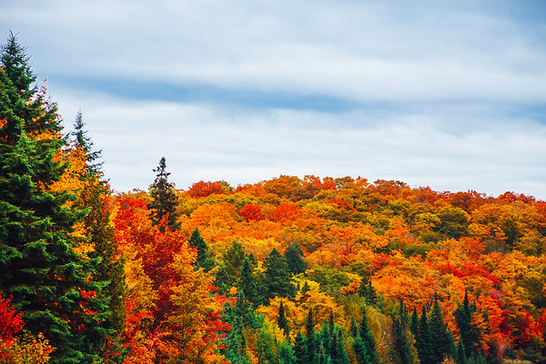 Colourful fall foliage in Algonquin Provincial Park in Ontario