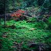 Colors in Algonquin Provincial Park, Ontario