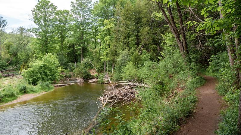 Trail along Whitemans Creek