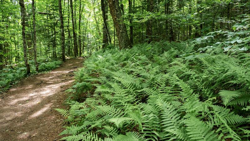 Stubb's Falls Trail