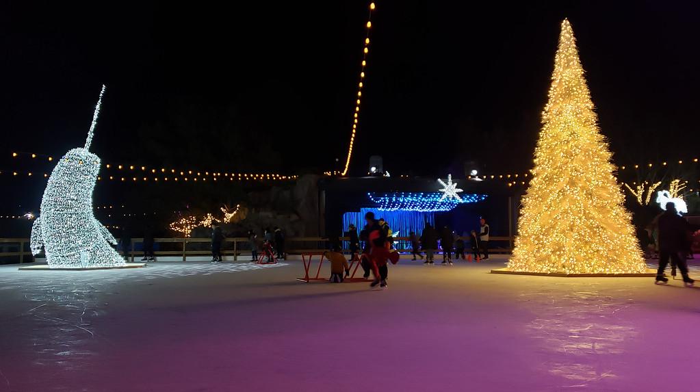 Aurora Winter Festival Toronto - Ice skating rink - frozen pond