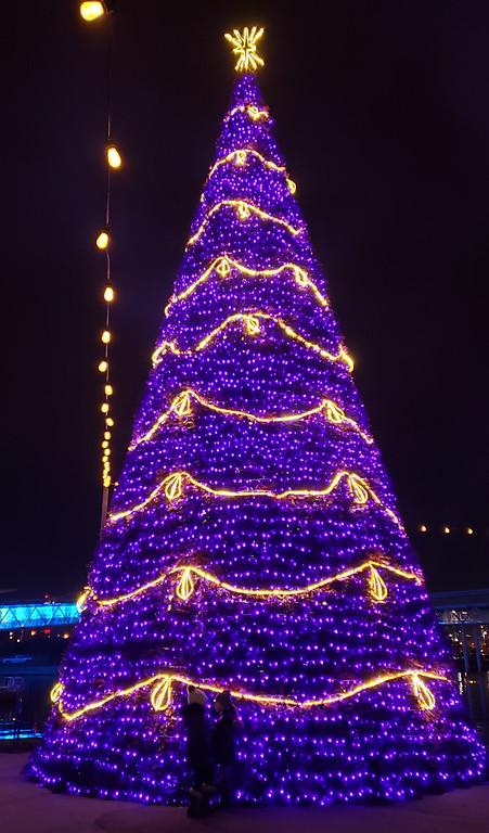 Purple Christmas tree at the Toronto Aurora Winter Festival - Christmas lights in Toronto