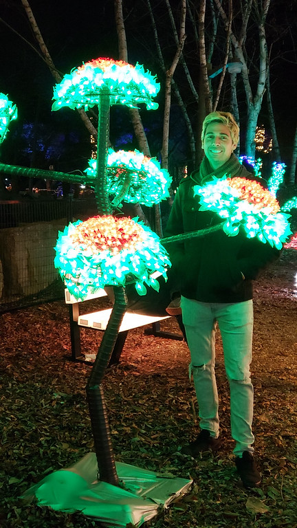 Aurora Winter Festival - Christmas lights in Toronto - Whimsical Forest