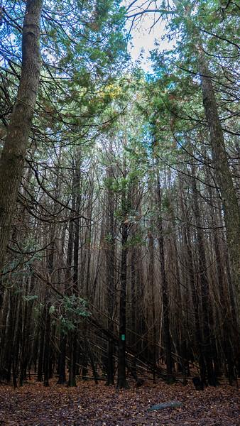 Lower Trent Conservation Cedar Loop