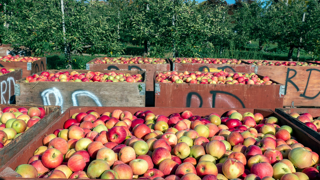 Dunnett Orchards