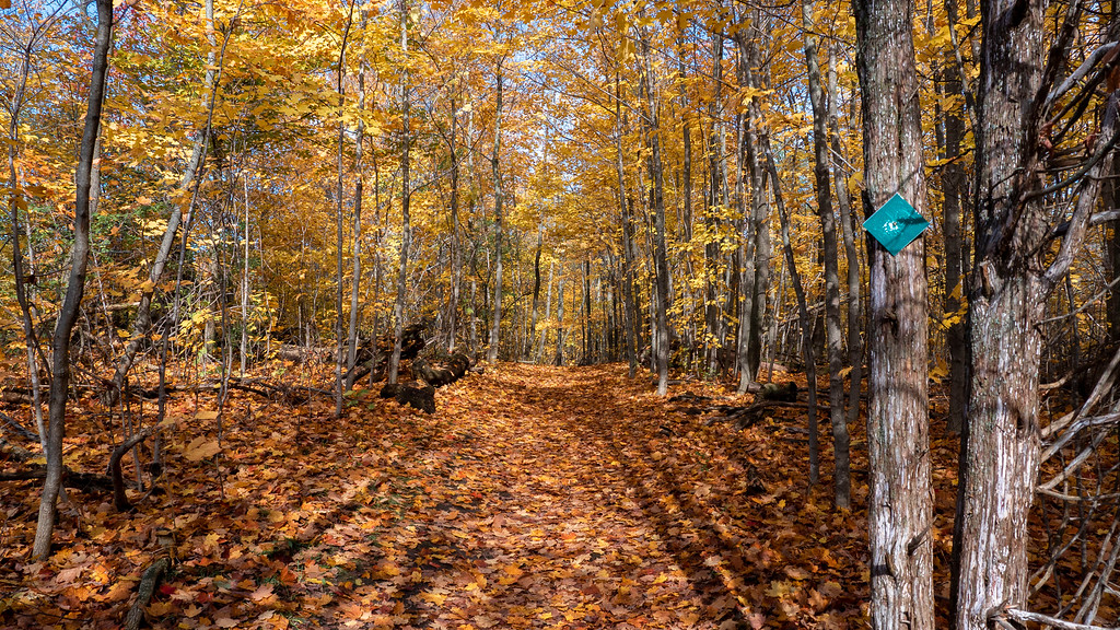 Proctor Park Conservation Area hiking trails - Hiking trails Bay of Quinte