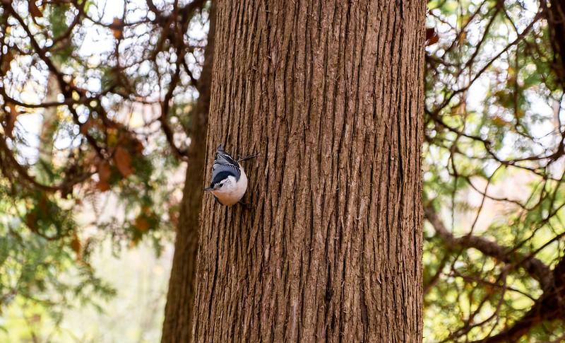 Things to Do at Presqu'ile Provincial Park: Birding