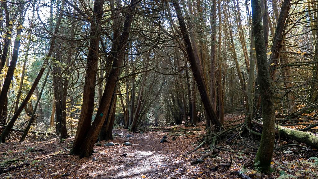Cedar Loop Trail