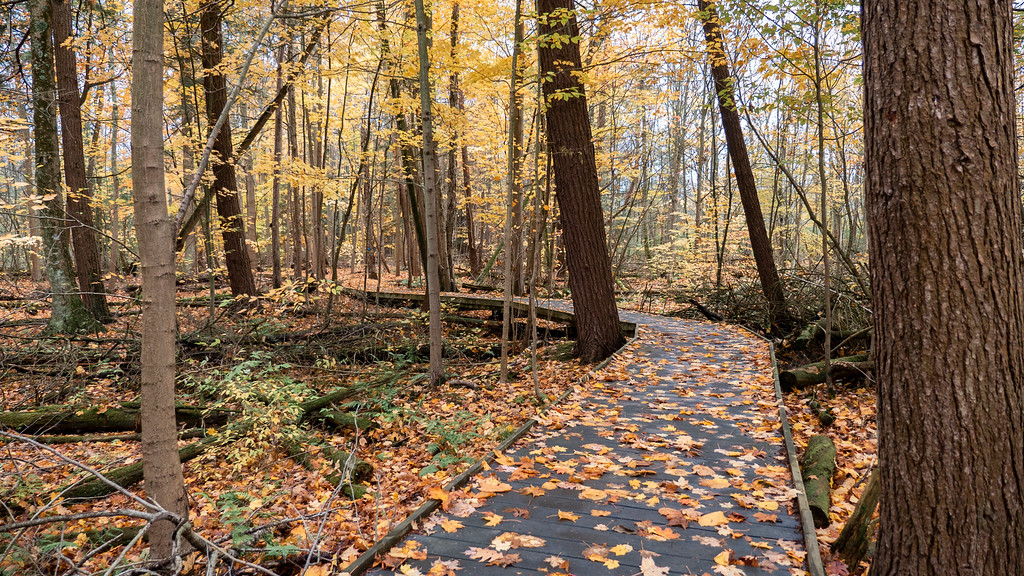 Jobes Woods Trail at Presqu'ile Provincial Park