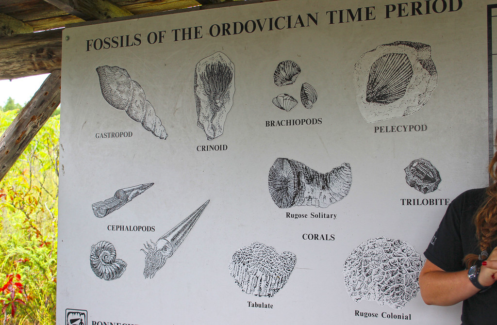 Fossils of the Ordovician Time Period