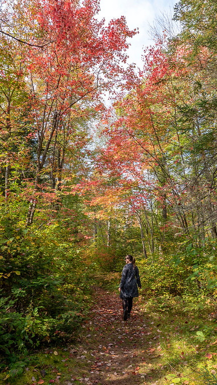 Bonnechere Provincial Park - Where to see fall foliage in Ontario Parks