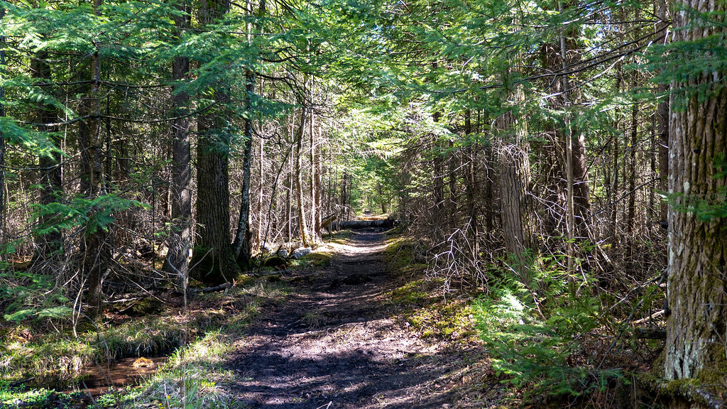 Hiking through the forest at Boyne Valley Provincial Park