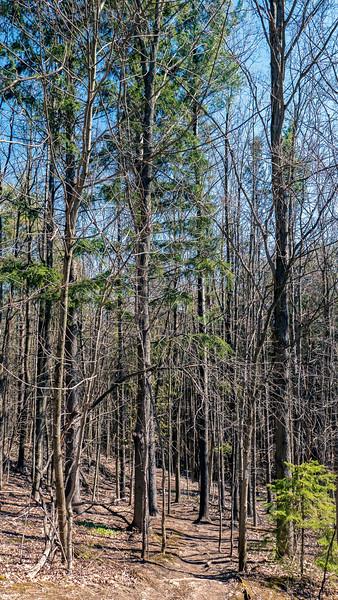 Boyne Valley Provincial Park - Forest