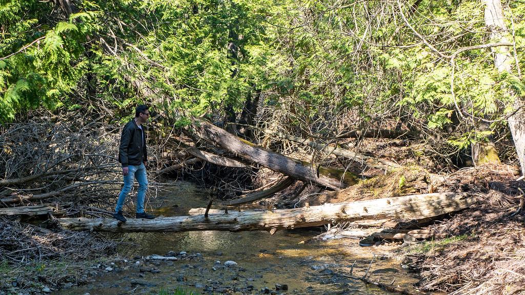The Boyne River at Boyne Valley Provincial Park, Ontario
