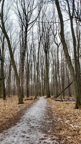 Lookout Ravine Trail - Bronte Creek