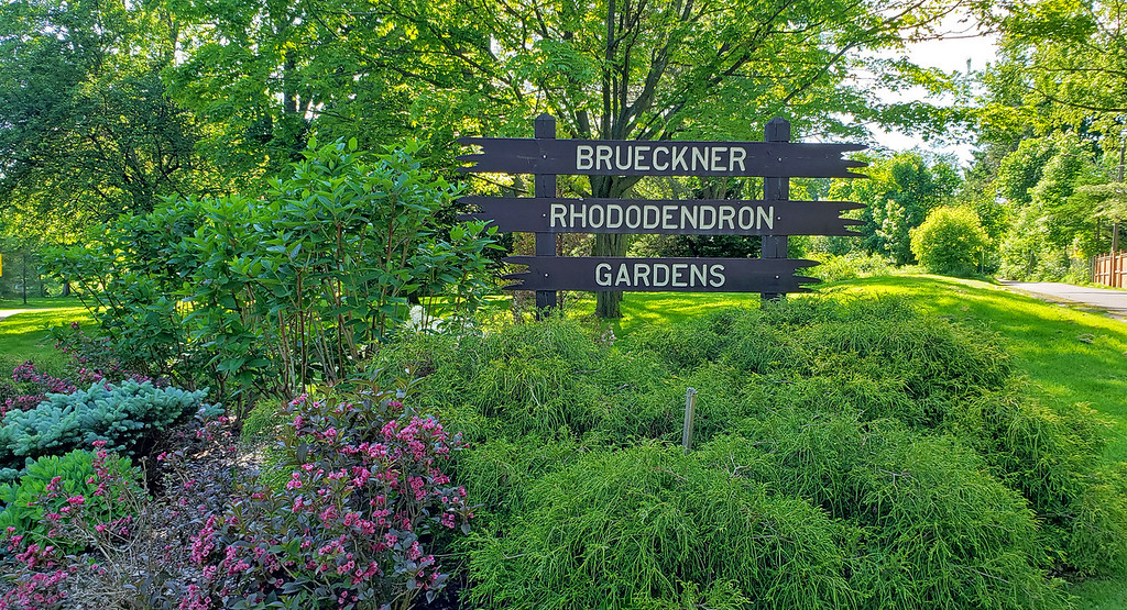 Best gardens in the GTA - Brueckner Rhododendron Gardens