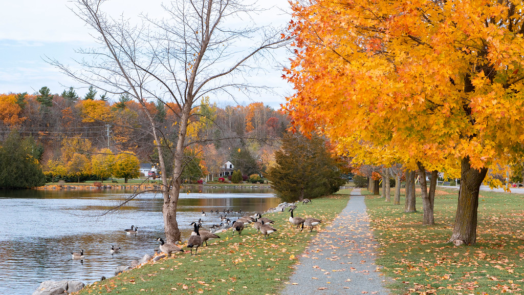 Rotary Park Campbellford