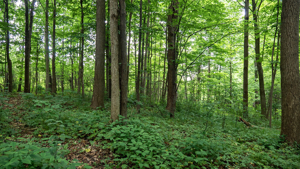 Forests in Brampton Ontario