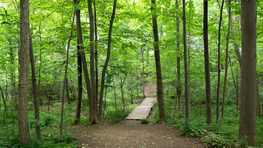Claireville Conservation Area - wooden bridge in the forest
