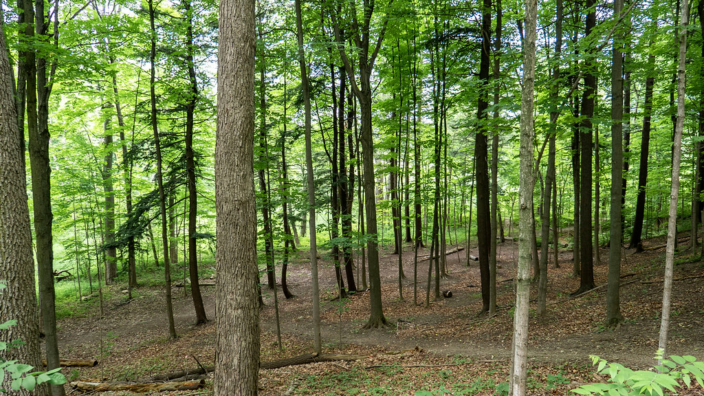 Forests of the TRCA (Toronto and Region Conservation Authority)