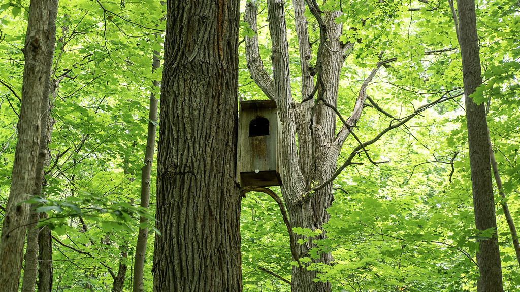 Nesting box for wildlife in the forest