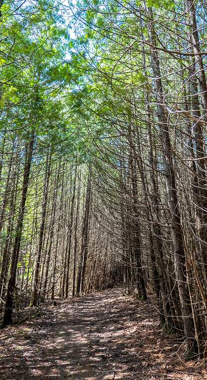 Tall trees at Cold Creek Conservation Area