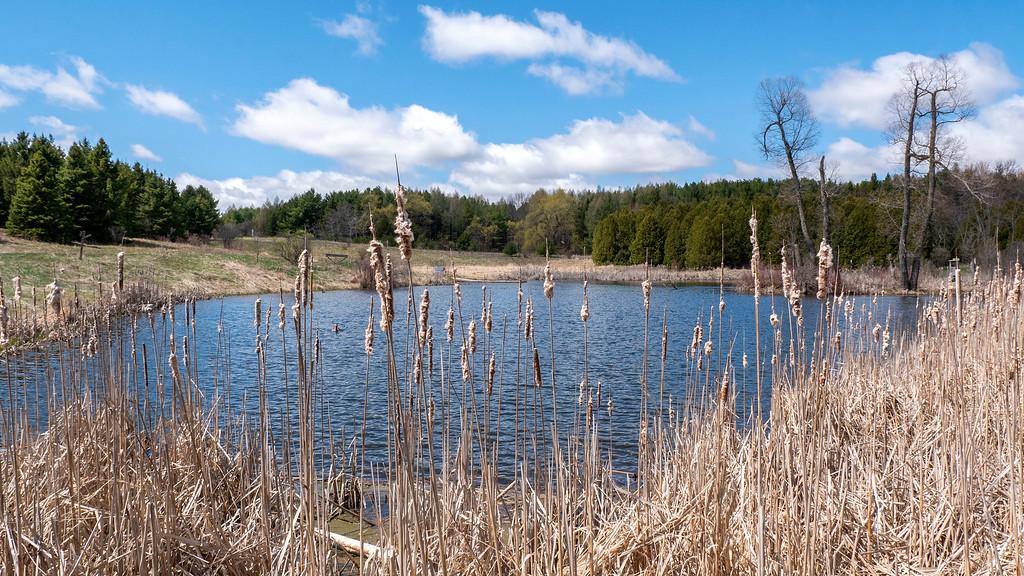 Hiking in Nobleton, Ontario