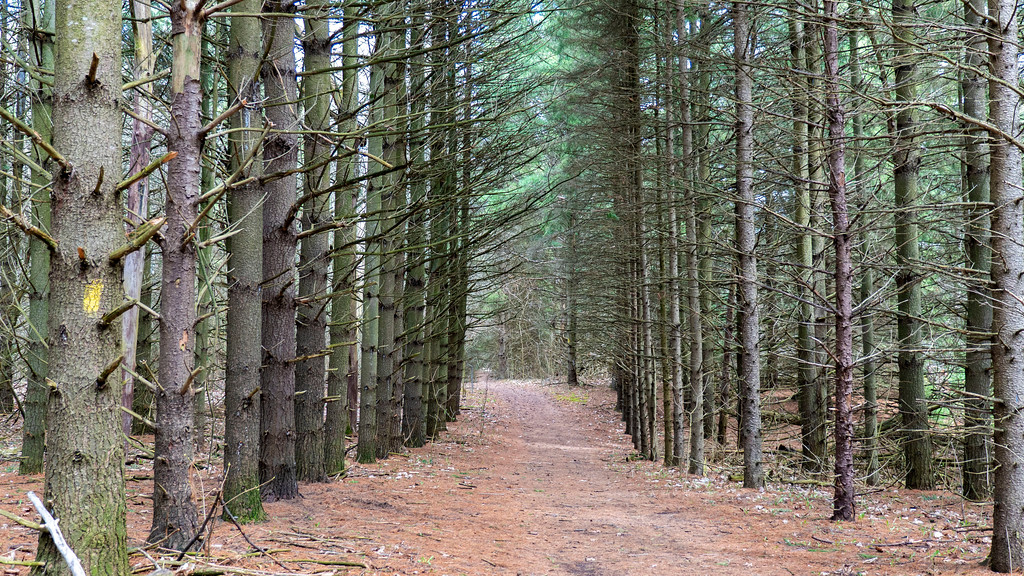 Pine Plantation Trail - Cold Creek Conservation Area