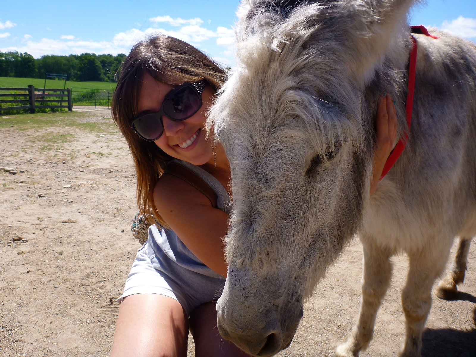 Donkey Sanctuary of Canada - Guelph, Ontario, Canada