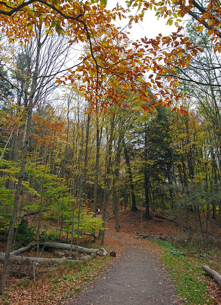 Dundas Valley Conservation Area - Main Loop Trail