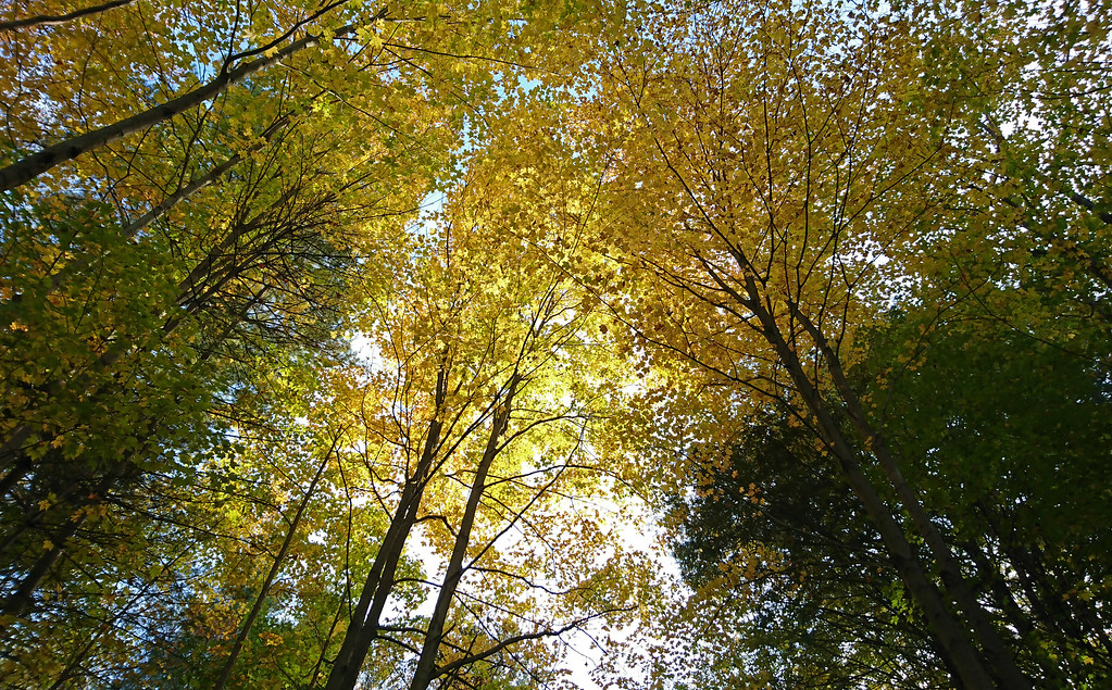 Fall at the Dundas Valley Trails