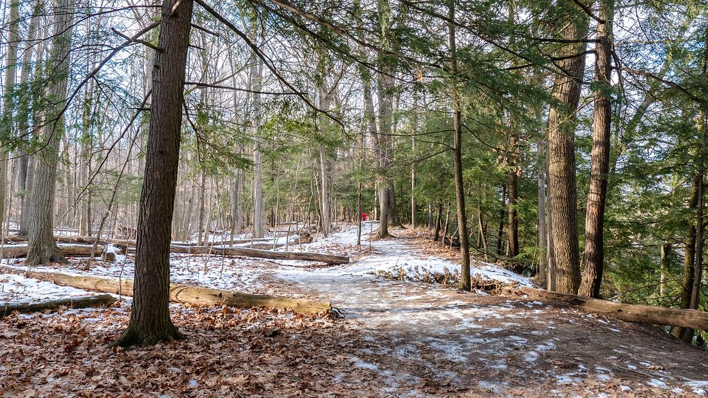 UTM Nature Trail