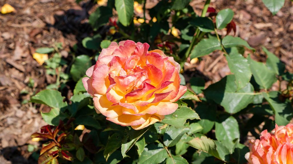 Gairloch Gardens Oakville