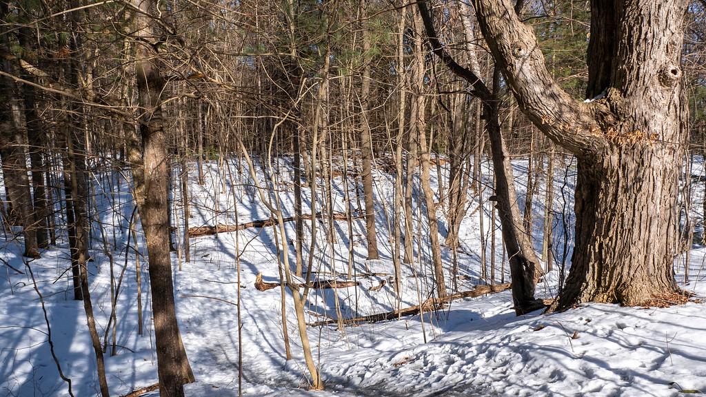 Winter hiking in Durham Region