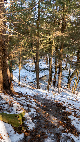 Greenwood Conservation Area hiking trails