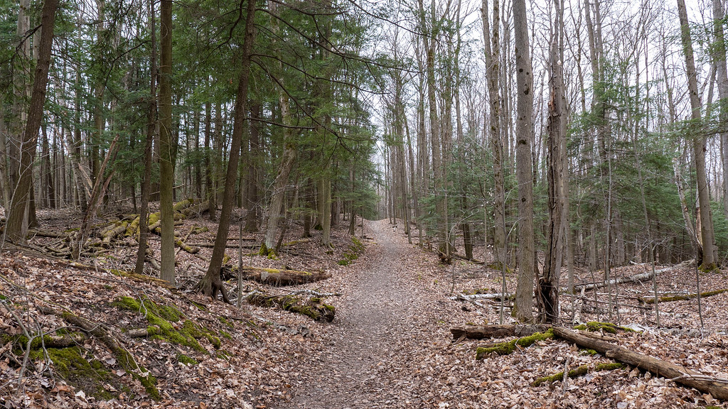 Happy Valley Forest - York Regional Forest in the Greater Toronto Area