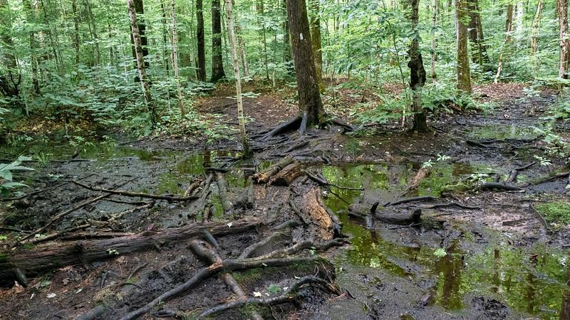 Muddy hiking trails