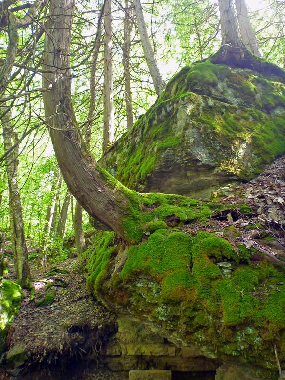 Hiking Trails near Kingston Ontario