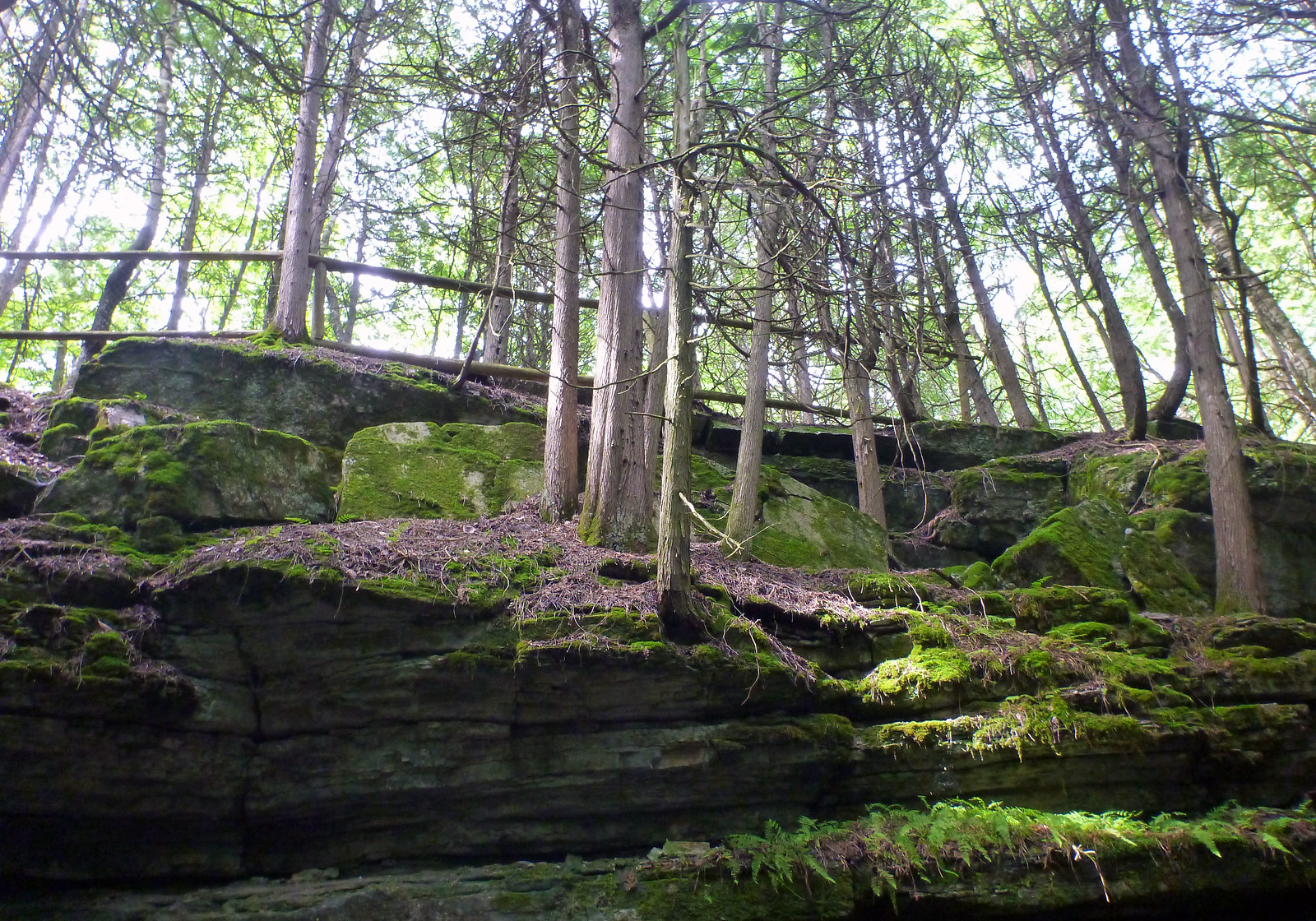 Hiking trails in Napanee and hiking trails near Kingston Ontario